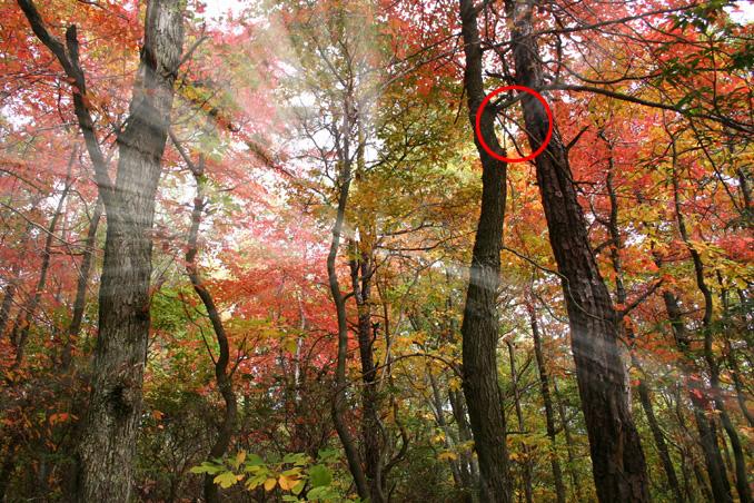 luchi sveta 9 Эффекты в Photoshop: Создаем реалистичные лучи света с помощью инструментов 3D
